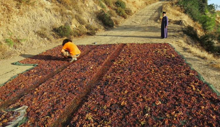 Drying the grapes of Commandaria under the hot sun of Cyprus